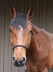 Police Horse Apollo