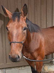 Police Horse Stanley